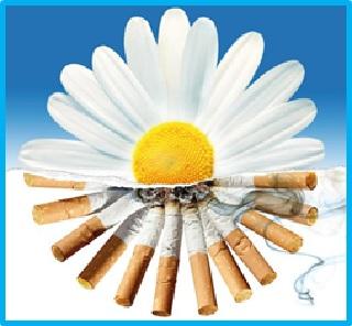 Открытки. Международный день отказа от курения. Ромашка