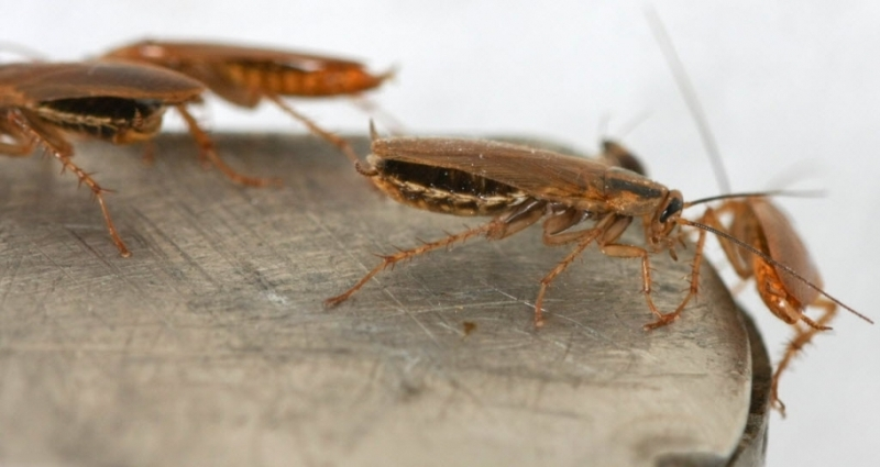 Как избавиться от тараканов? (2 фото)