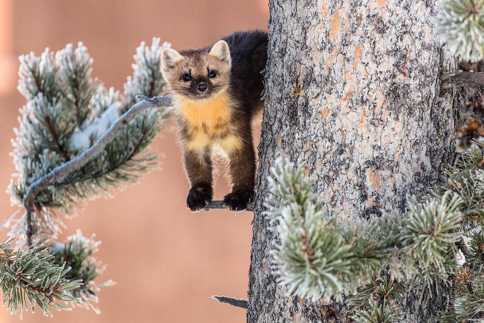 21. Бизончик. (Фото National Park Service | Jim Peaco):