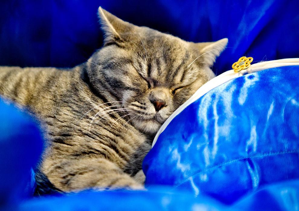 8. … и мастера по занятию экстравагантных поз для сна. (Фото Shirlaine Forrest   WireImage):