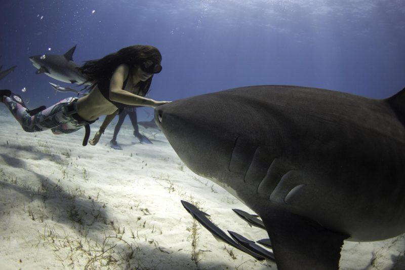 «Я просто люблю акул и тот страх, который они вызывают у людей», — отметила она.