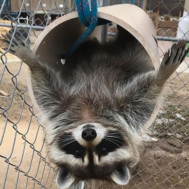 фото года фото за год рабочие фото животные волонтер волонтеры правило спасение