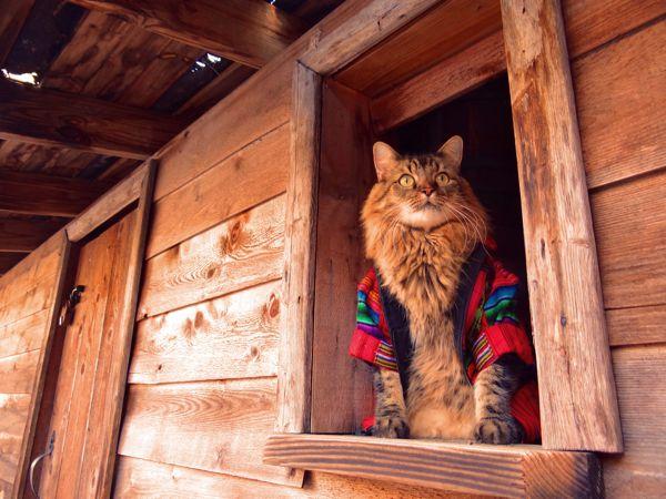 Кот Лоренцо, который благодаря своей хозяйке Джоан Бионди прославился в сети своими забавными фотографиями в различных нарядах