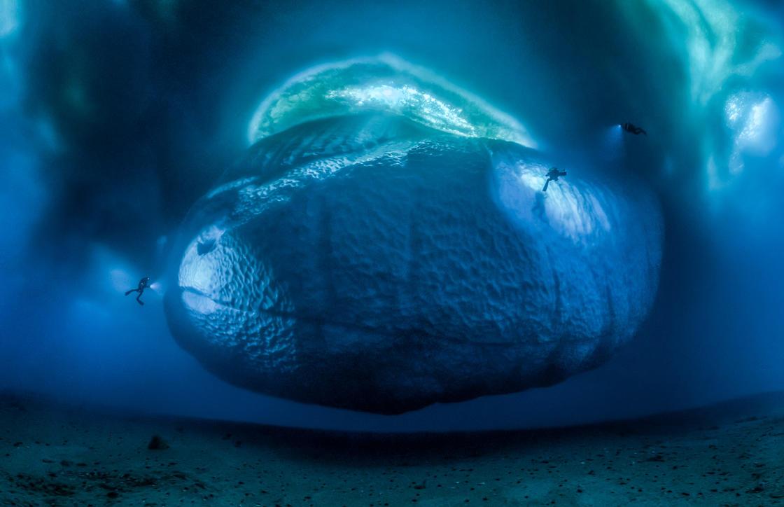 © Laurent Ballesta - Wildlife Photographer of the Year