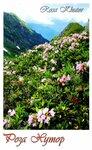 Цветы РХ.jpg