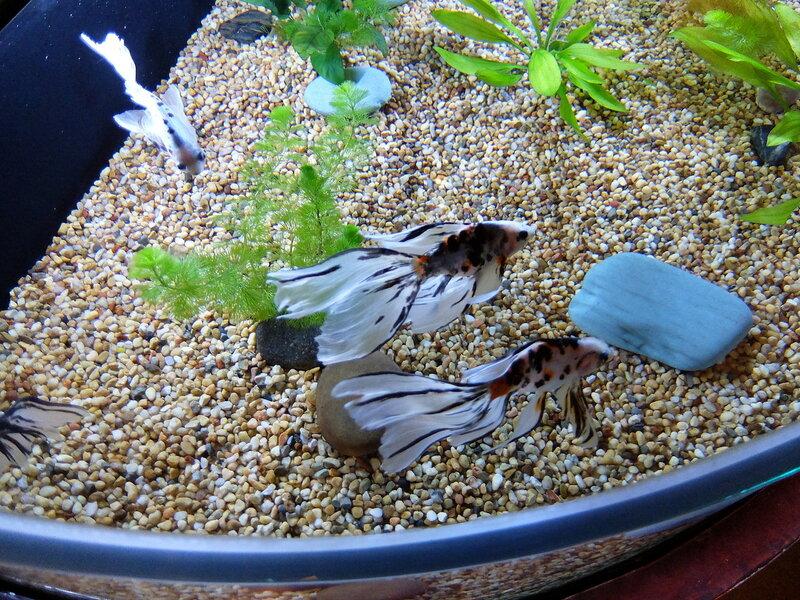 Гонконг - Oкеанический парк - Рыбки в аквариуме