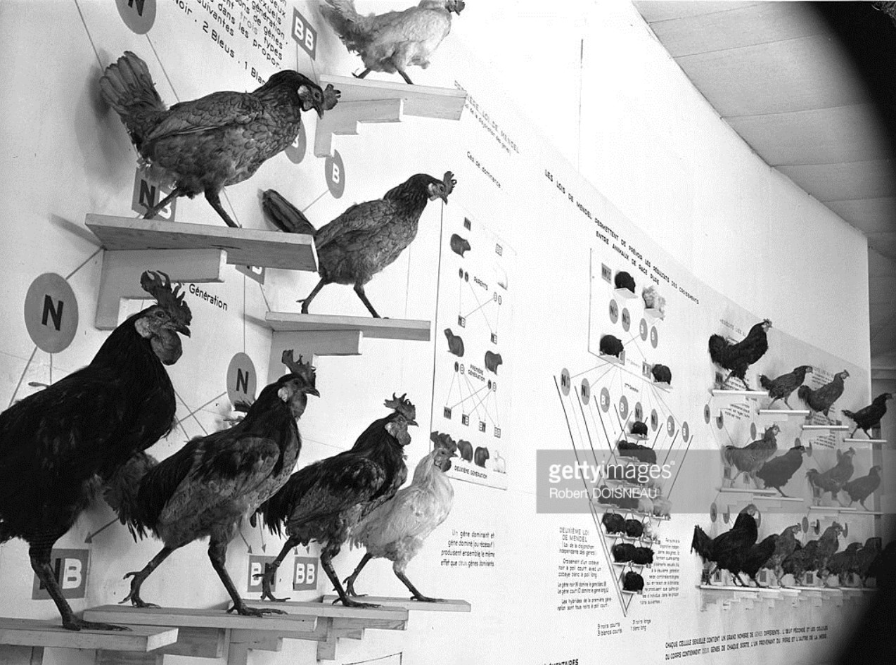1948. Музей науки и техники «Дворец открытий» в Париже. Один из залов