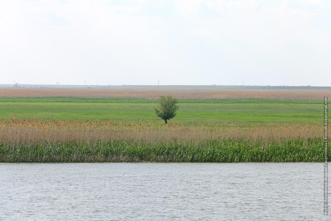 Местность в дельте Волги в основном ровная, как на фото, а деревья низкие и редкие