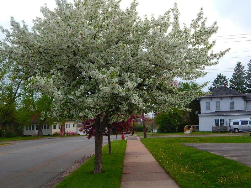 Merrill. Spring-2015.