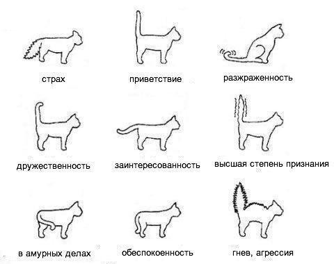 настроение кота инструкция