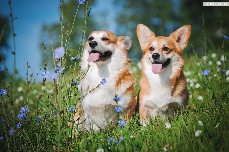 пофотографирую Ваших собак! - Страница 5 0_162497_b99e0185_orig