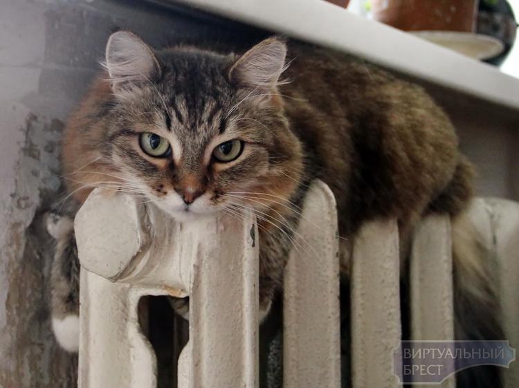 В Брестской области у потребителей отключают отопление