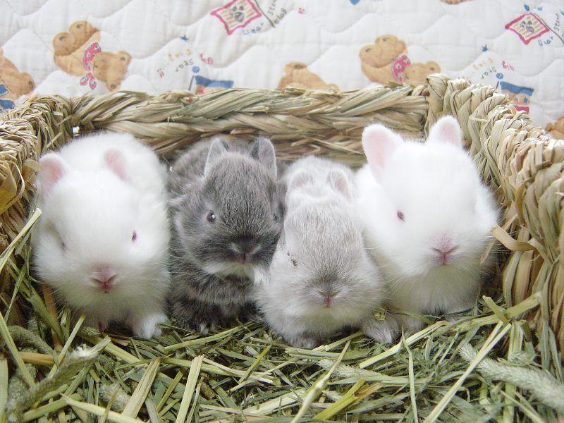 уход за крольчатами