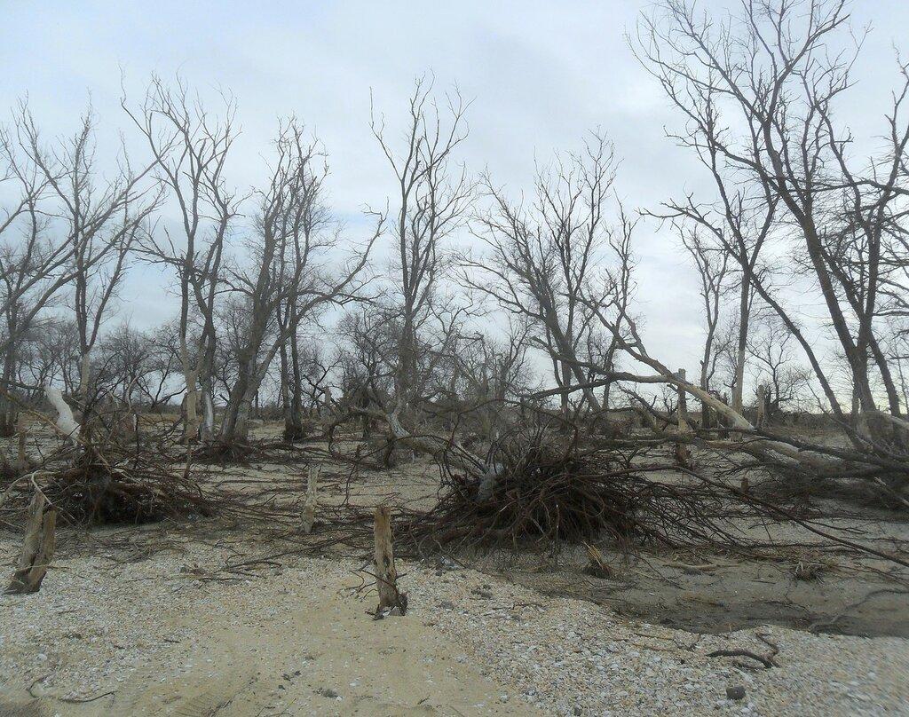 Ждут деревья ... SAM_5621.JPG