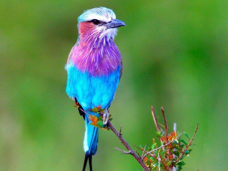Волшебные птицы (45 отличных фото на рабочий стол) 0 312b1 19ba410c XL