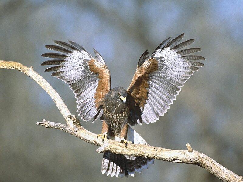 Волшебные птицы (45 отличных фото на рабочий стол) 0 312bc dd3c80bf XL