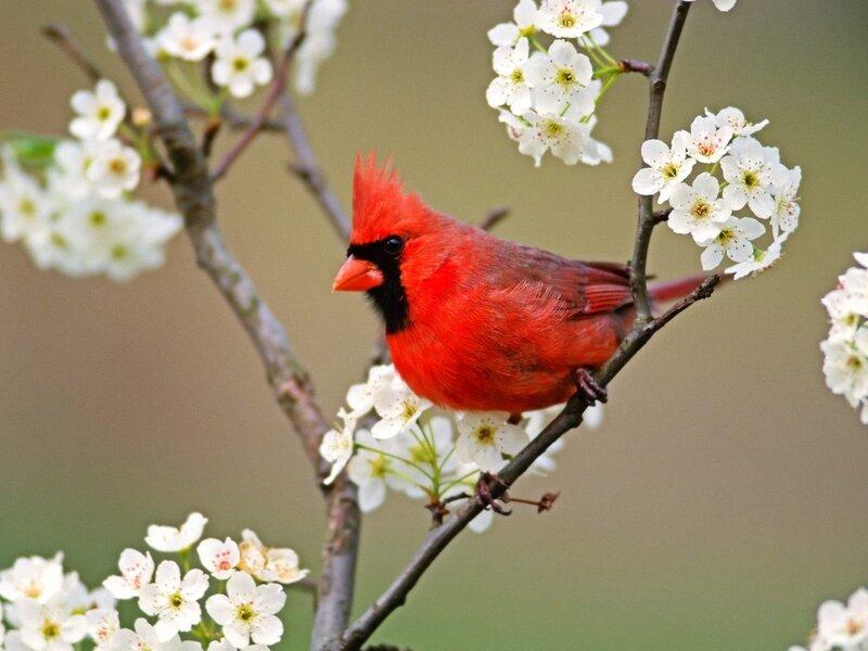 Волшебные птицы (45 отличных фото на рабочий стол) 0 312d9 768022e2 XL