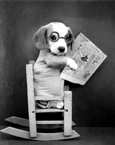Фотограф Harry Whittier Frees - забавные животные