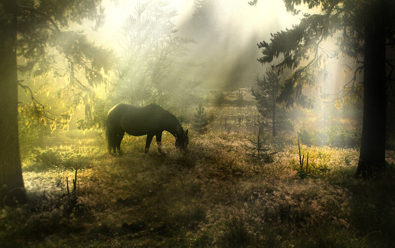 Фото Alexander Matev
