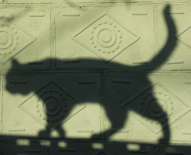 Бродит тень по зелёной стенке...