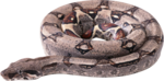 snake_PNG4056.png