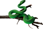 snake_PNG4084.png