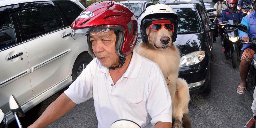 8. У собак здесь есть масса поклонников.
