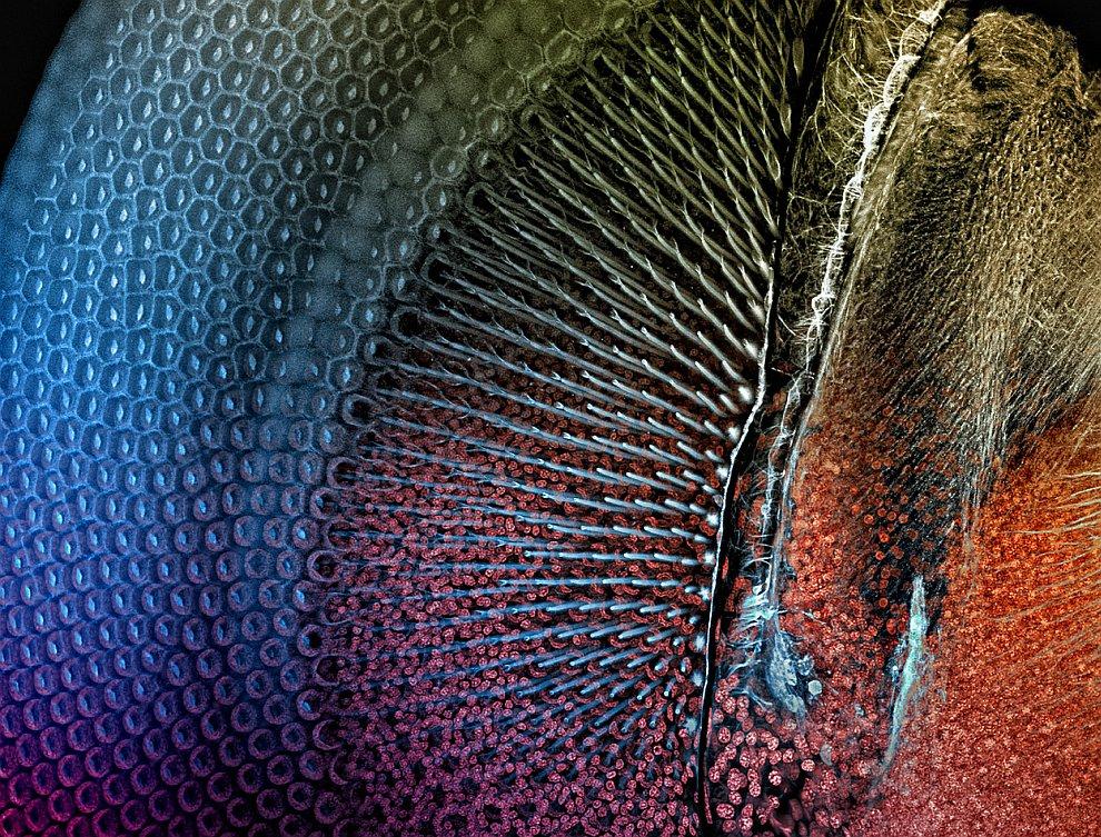 Поощрительная премия. Подводная фотография  коралла Montastraea annularis . (Ф