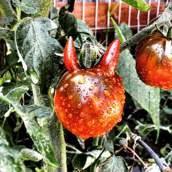 Необычные фрукты и овощи, на которые нужно посмотреть дважды
