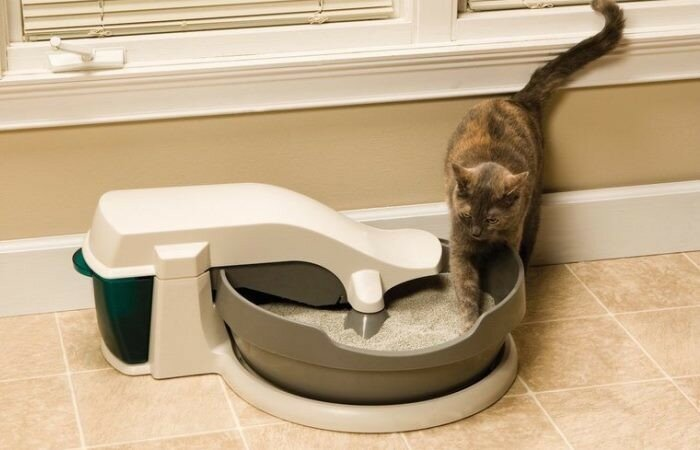 best cat litter for smelly poop