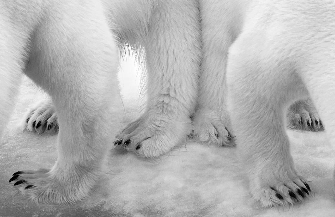 © Eilo Elvinger - Wildlife Photographer of the Year