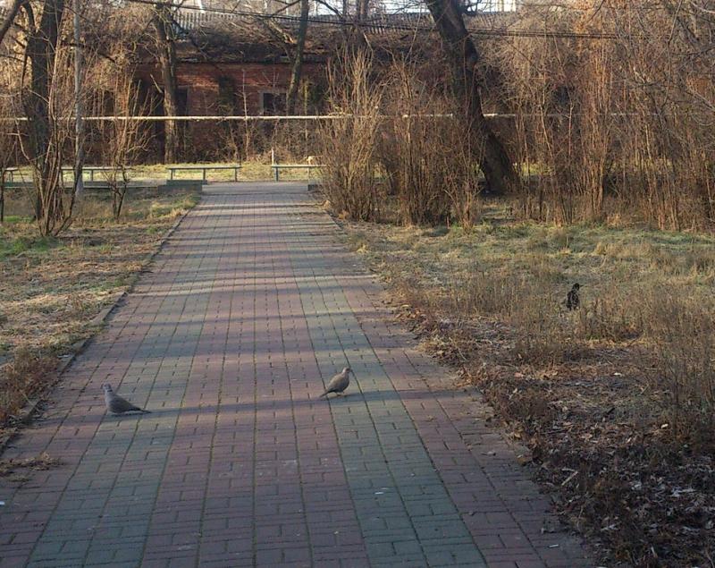 голуби-и-др.-8.jpg