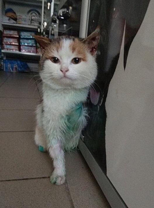 В Ростове двухлапая кошка Косичка нашла своих хозяев