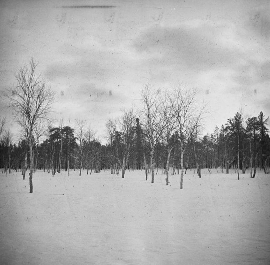 199. Заснеженное болото