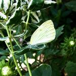 Бабочка 2.jpg