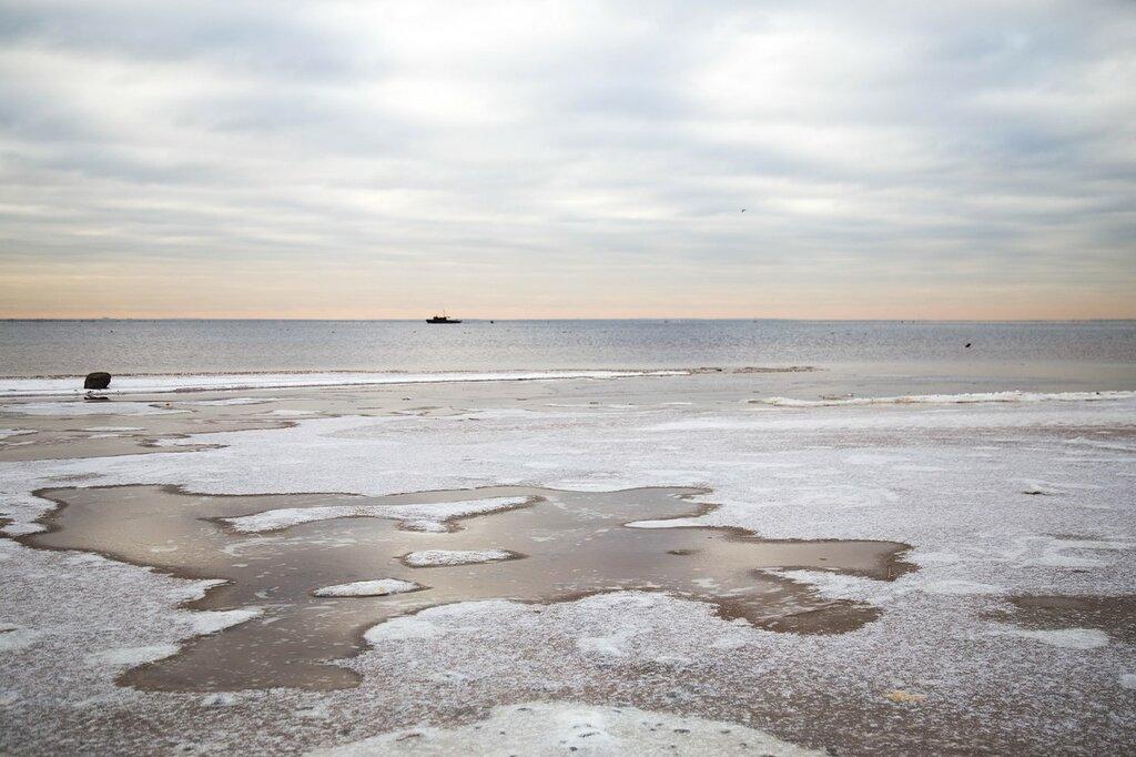 финский залив фото сегодня целом