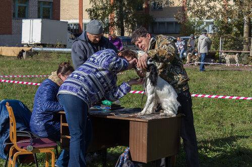 56-я Областная выставка в Пскове. 0_b2b22_29d1c065_L