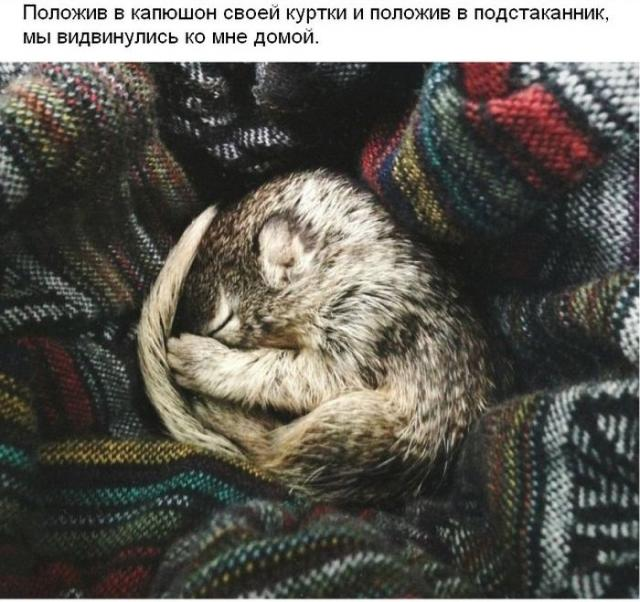 Спасение новорожденного бельчонка