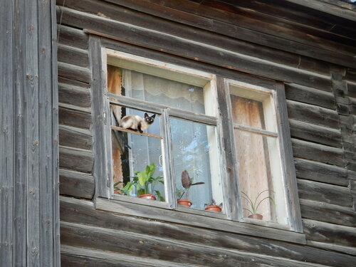 Череповец-Чагода