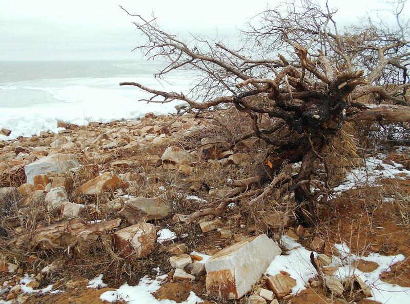 У корней павшего дерева ... DSCN3350.JPG