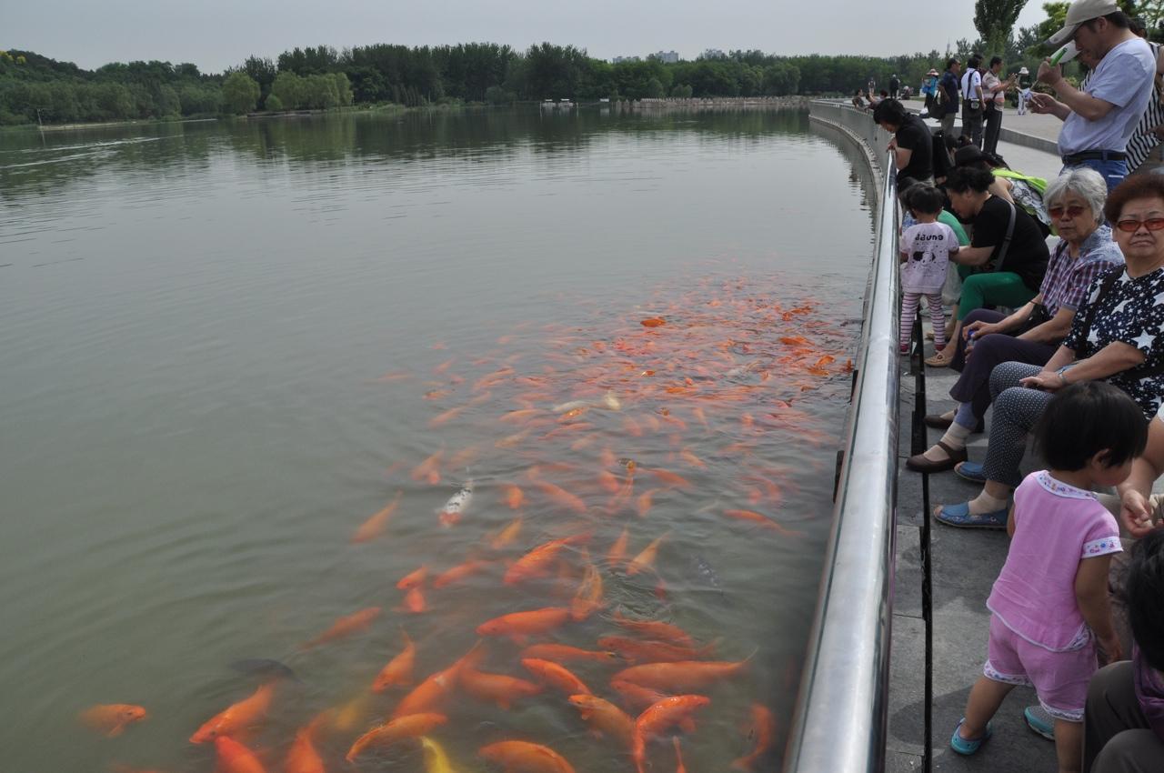 Примерно так должны выглядеть китайцы в аквапарке