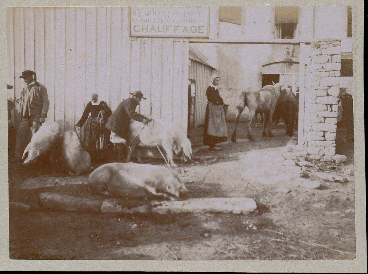 1900. Кемпер. Рынок свиней