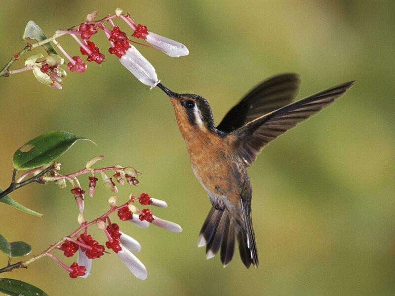 Волшебные птицы (45 отличных фото на рабочий стол) 0 312b8 e0770cce XL