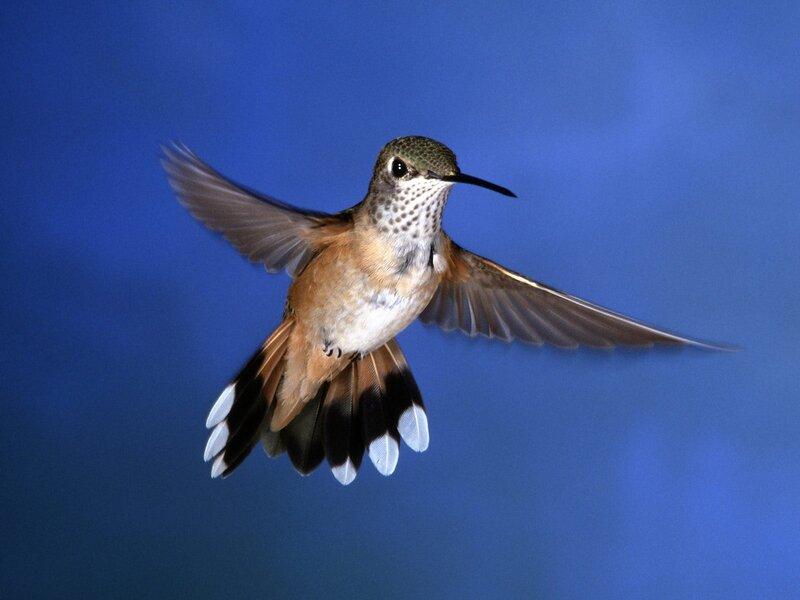 Волшебные птицы (45 отличных фото на рабочий стол) 0 312b9 5e744ff XL