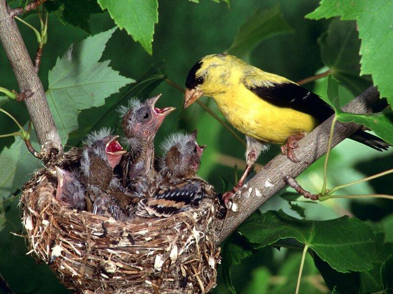 Волшебные птицы (45 отличных фото на рабочий стол) 0 312c1 910ba7aa XL