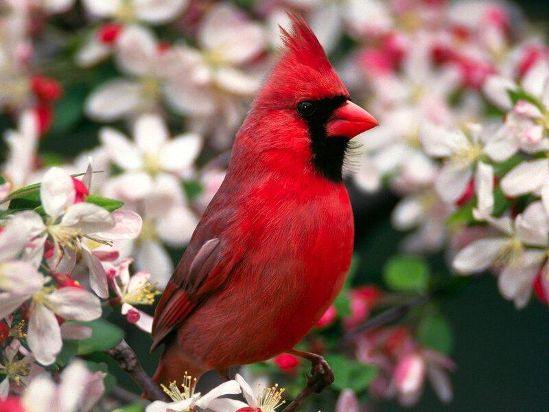 Волшебные птицы (45 отличных фото на рабочий стол) 0 312c6 57ce602 XL