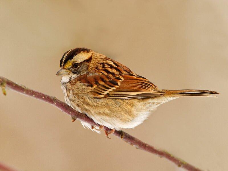 Волшебные птицы (45 отличных фото на рабочий стол) 0 312cf 878d9969 XL