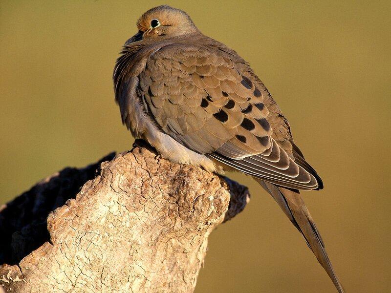 Волшебные птицы (45 отличных фото на рабочий стол) 0 312d1 f6220975 XL