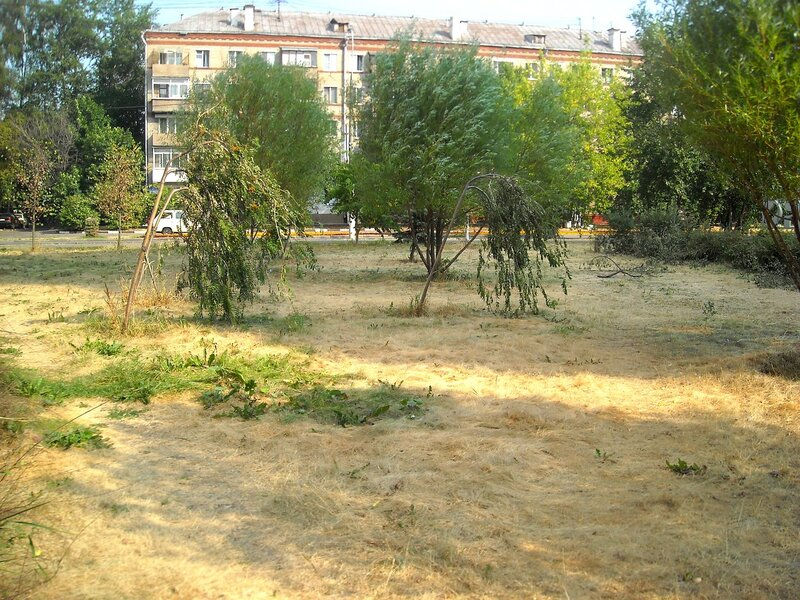 Знойное лето 2010