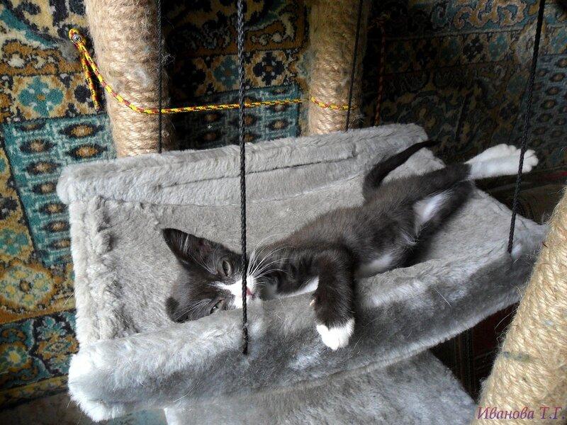 Котявочки.